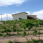 shattuck vineyard